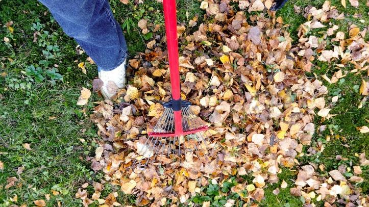 raking-2756006_1920